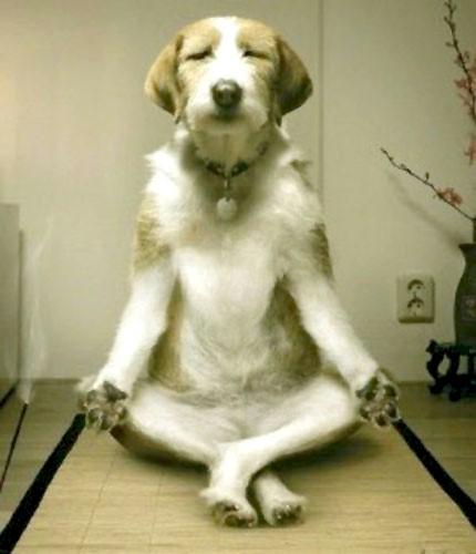 DogMeditation