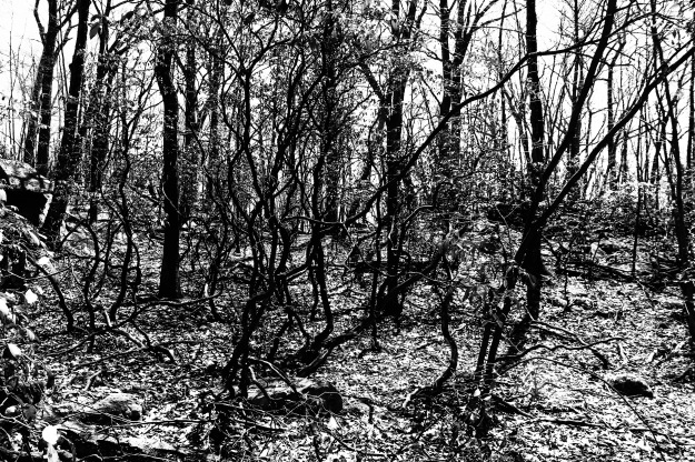 bw woods one
