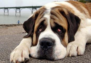sad-dog_l