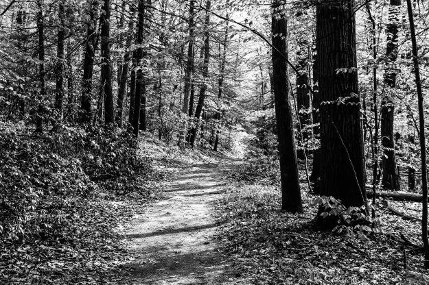 trail 2